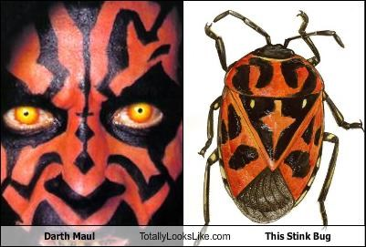 darth maul,star wars,Stink Bug