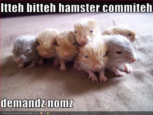 Itteh bitteh hamster commiteh  demandz nomz