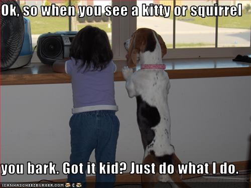 Ok, so when you see a kitty or squirrel   you bark. Got it kid? Just do what I do.