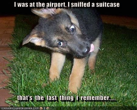 I was at the airport, I sniffed a suitcase  that's  the  last  thing  I  remember.....