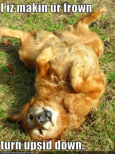belly,frown,golden retriever,happy,Sad,smile,upside down