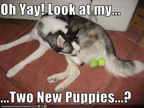 Oh Yay! Look at my...  ...Two New Puppies...?