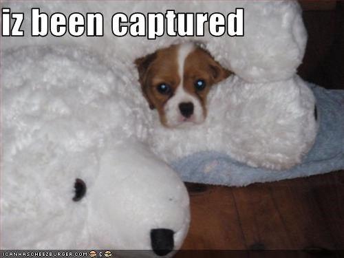 iz been captured