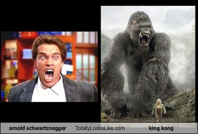 arnold schwartznegger Totally Looks Like king kong