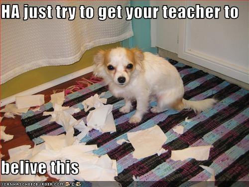 chihuahua,destruction,homework,paper