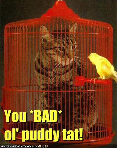 You *BAD* ol' puddy tat!