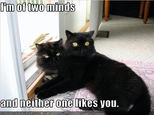 I'm of two minds  and neither one likes you.