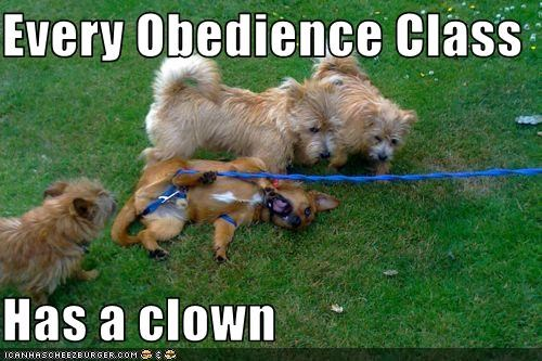 Every Obedience Class  Has a clown