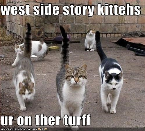 west side story kittehs  ur on ther turff