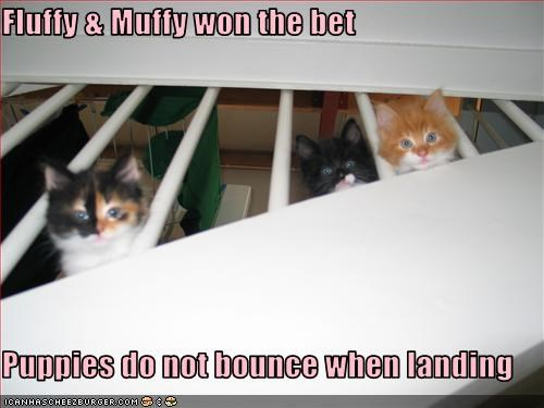 Fluffy & Muffy won the bet  Puppies do not bounce when landing