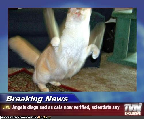Breaking News - Angels disguised as cats now verified, scientists say