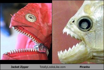 Jacket Zipper Totally Looks Like Piranha