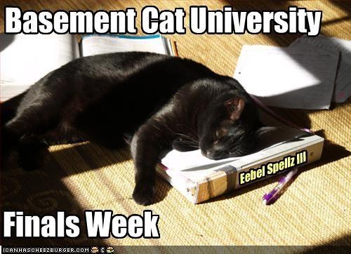 Basement Cat University