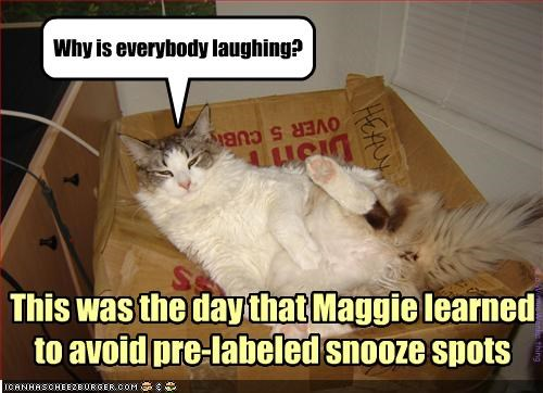 if Maggie could read, she'd have slept somewhere else