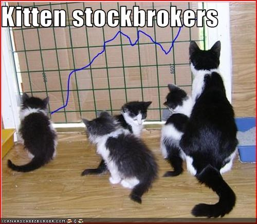 Kitten stockbrokers