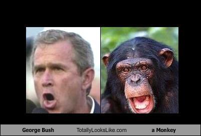George Bush Totally Looks Like a Monkey