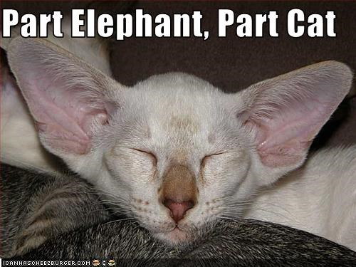 Part Elephant, Part Cat