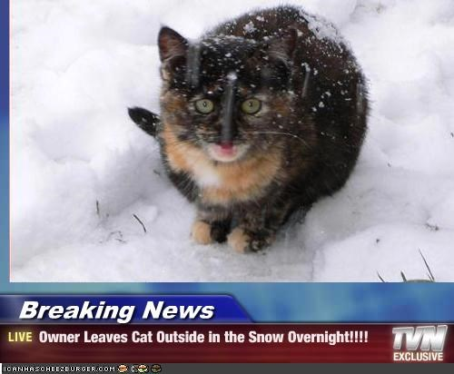 Breaking News - Owner Leaves Cat Outside in the Snow Overnight!!!!
