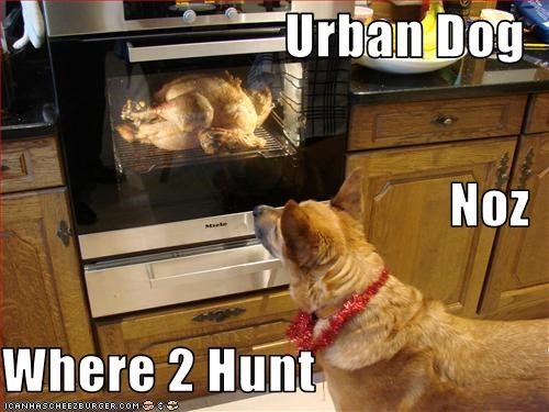 Urban Dog   Noz Where 2 Hunt