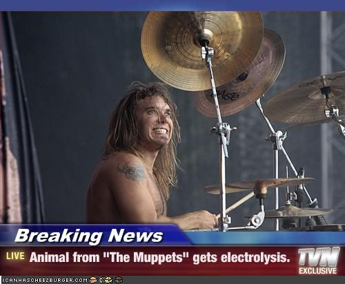 "Breaking News - Animal from ""The Muppets"" gets electrolysis."