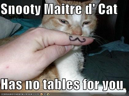 Snooty Maitre d' Cat  Has no tables for you