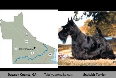 county,dogs,Georgia,map,scottish terrier