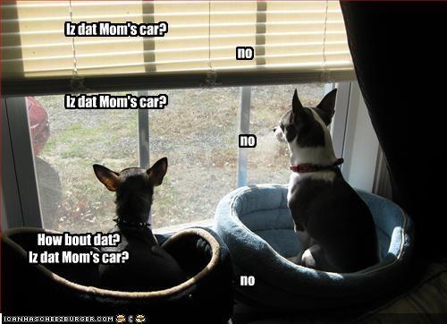 cars,chihuahua,home,miss,mom