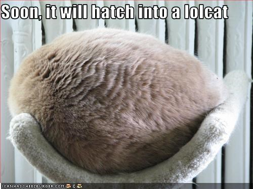 Soon, it will hatch into a lolcat