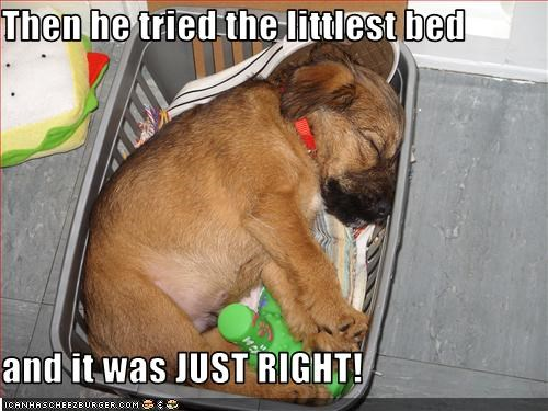 Then he tried the littlest bed  and it was JUST RIGHT!
