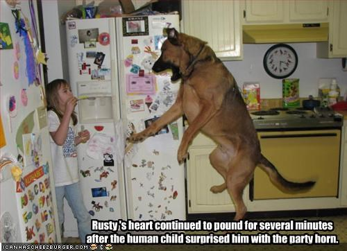 Rusty 's heart continued to pound for several minutes after the human child surprised him with the party horn.