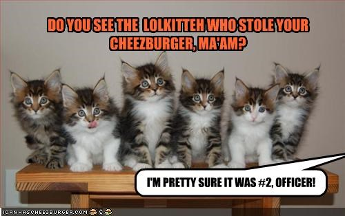 DO YOU SEE THE  LOLKITTEH WHO STOLE YOUR CHEEZBURGER, MA'AM?