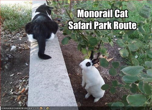 Monorail Cat Safari Park Route