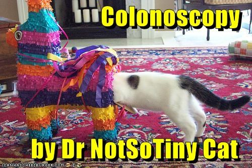 Colonoscopy  by Dr NotSoTiny Cat