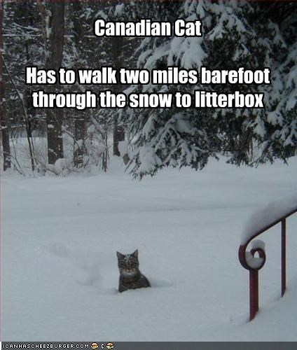 Canadian Cat  Has to walk two miles barefoot through the snow to litterbox