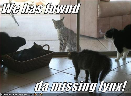 We has fownd  da missing lynx!