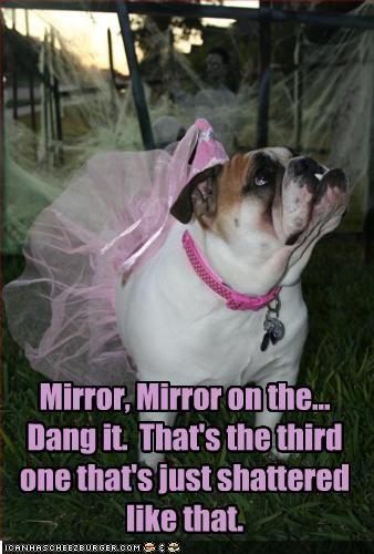 ballerina,broken,bulldog,costume,mirror,snow white