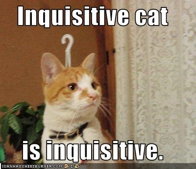 Inquisitive Cat