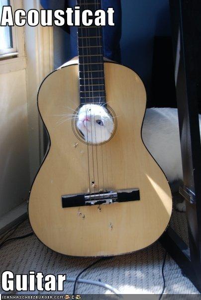 Acousticat  Guitar
