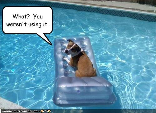 inflatable,jack russel terrier,lounge chair,pool,pool toy,swimming