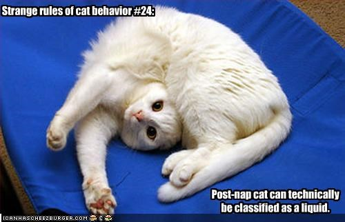 Strange rules of cat behavior #24: