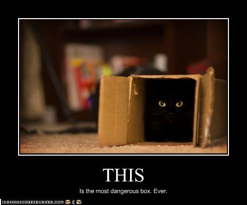 basement cat,box,danger