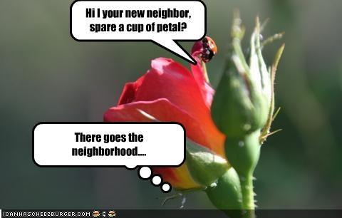There goes the neighborhood....