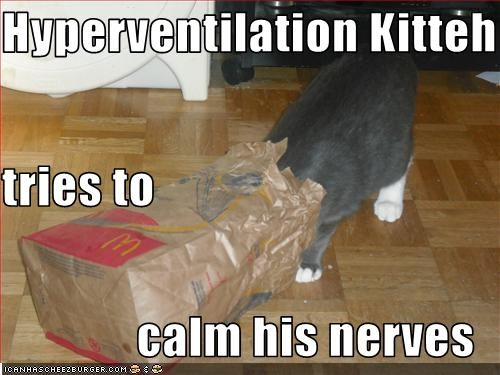 Hyperventilation Kitteh t tries to calm his nerves