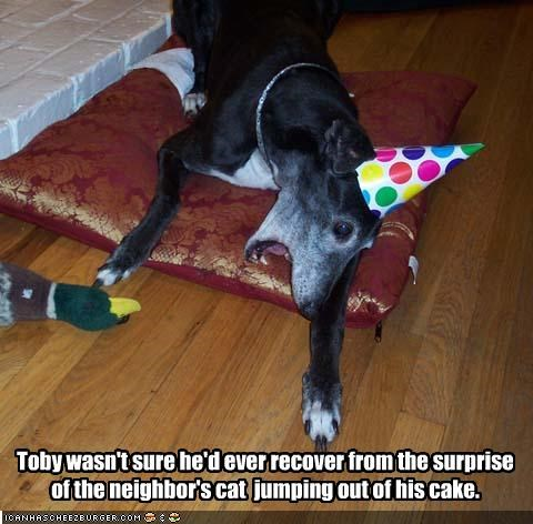 Toby wasn't sure he'd ever recover from the surprise of the neighbor's cat  jumping out of his cake.