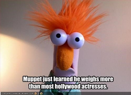 Muppet just learned he weighs more than most hollywood actresses.