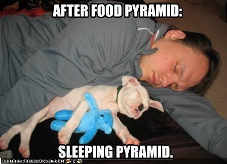 food,human,pile,pitbull,puppy,pyramid,sleeping,stuffed animal,teddy bear
