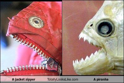 A jacket zipper Totally Looks Like A piranha