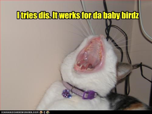 I tries dis. It werks for da baby birdz