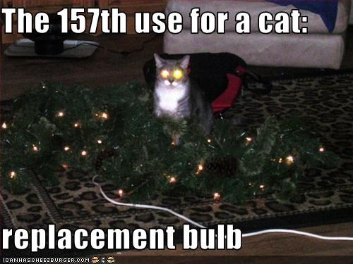 The 157th use for a cat:  replacement bulb