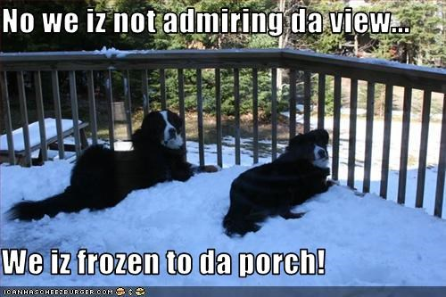 No we iz not admiring da view...  We iz frozen to da porch!